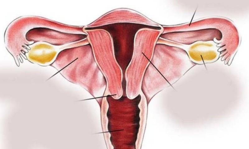 स्तन तथा पाठेघरको मुखको क्यान्सर रागेको निशुल्क परीक्षण गरिने