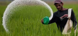 साल्ट ट्रेडिङले ल्याएको रासायनिक मल वीरगंज भित्रियो, विहीबारदेखि किसानले पाउने
