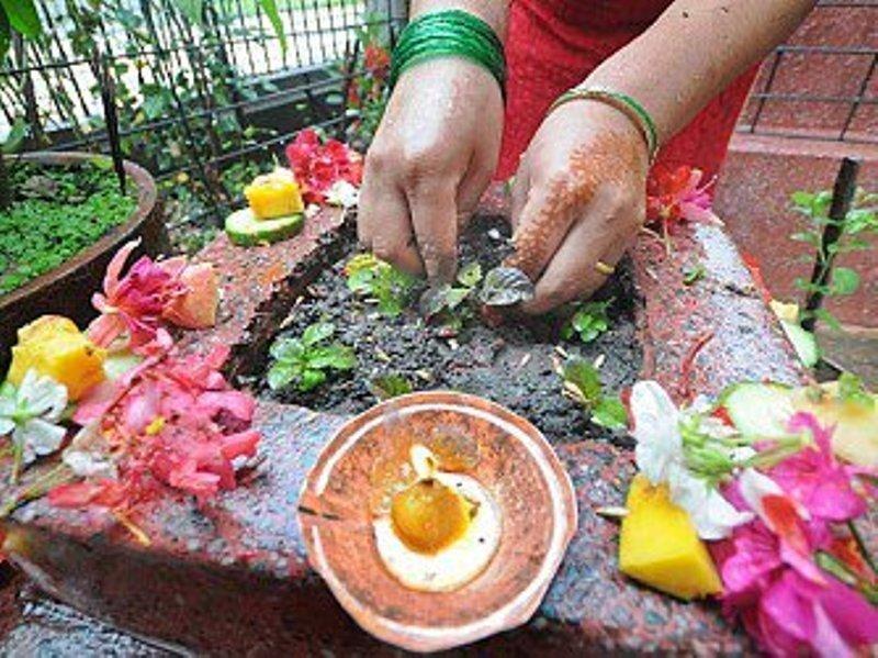 आज हरिशयनी एकादशी:घरघरमा तुलसीको बिरुवा रोपेर मनाइँदै